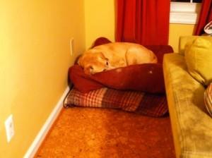 Winer Sleep