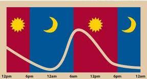 dadrenal gland circadian rhythm
