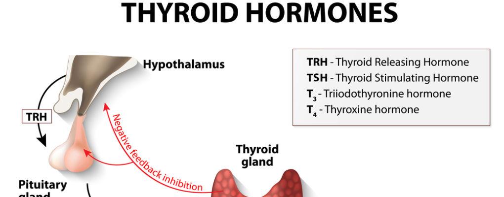 Hormonal Health